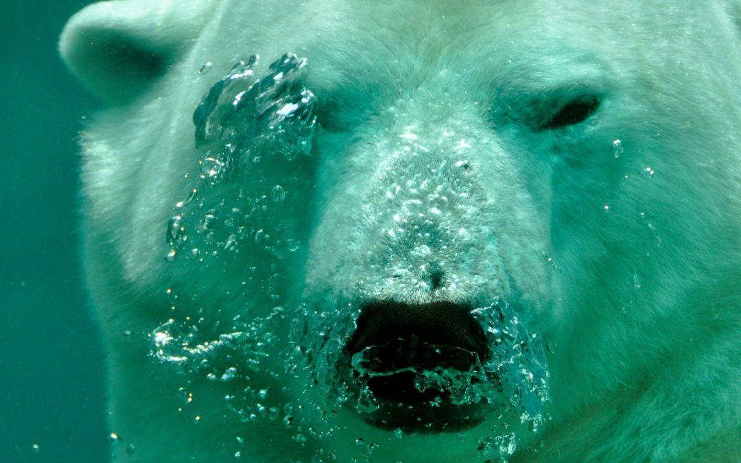 Il libro dell'orso polare